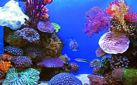 Anime Live Wallpaper Mod Apk - bestoffapk aquarium live wallpaper v1 3 mod ad free