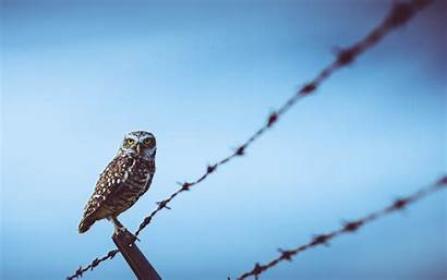 Birds Wire Barbed Fence Owl Animals Animal