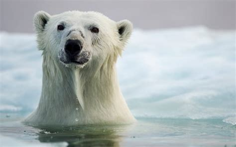 Bears Animals Facts for Kids