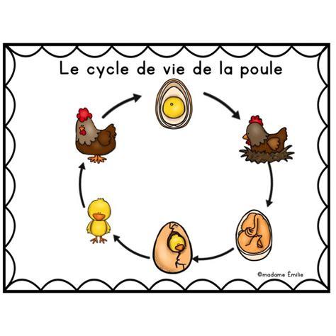 cycle de vie la poule