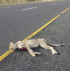 South Africa Animals Wildlife