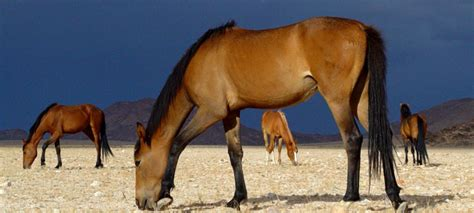 africa south wild horses namibia adventure self drive classic 4x4