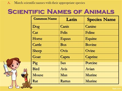veterinary terminology  video