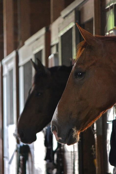 barn horse horses portraits left