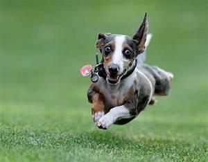excited-dog - TheDogTrainingSecret.com