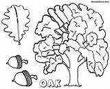 Oak Tree Coloring Sheet Colorings sketch template