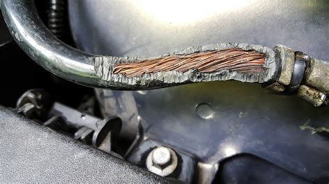 rodents  chewing  car wires