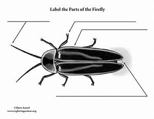 Firefly Labeling Page