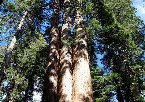 Fotos Del Parque Secuoyas En California