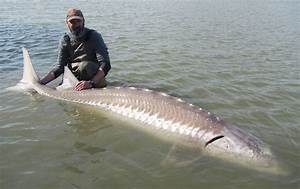 Sturgeon Fishing Guides Charters Vancouver, Chilliwack ...