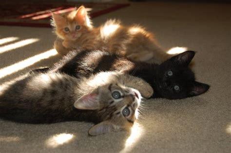 adopting feral born kittens pets