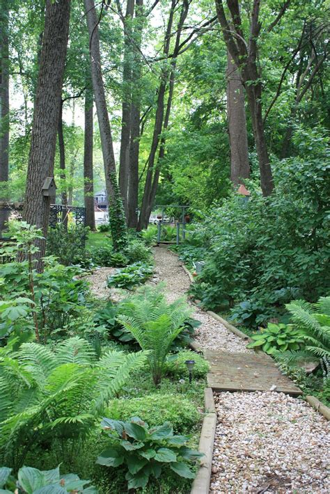 woodland gardening shade loving plants for the woodland garden