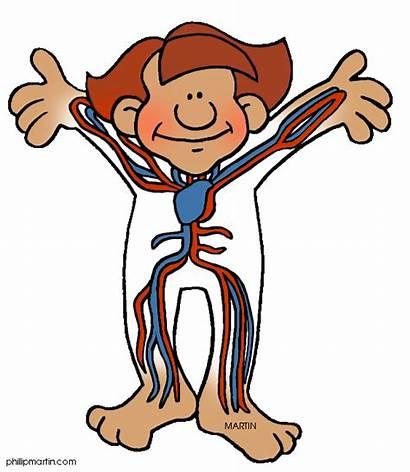 Inside Circulatory Organ Heart Science System Clip