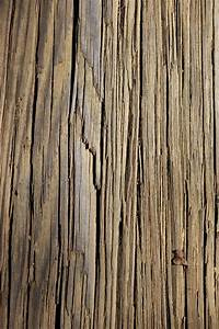 Free, Images, Tree, Nature, Branch, Texture, Plank, Leaf, Floor, Trunk, Tan, Soil, Lumber, Lines