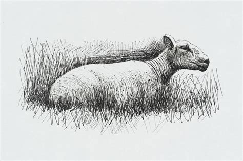 henry moore om ch sheep resting    henry moore