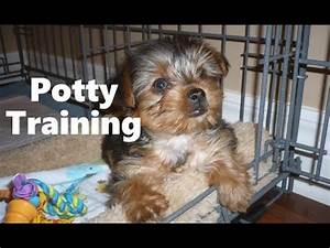 how to potty train a morkie puppy morkie house training With potty train your dog fast