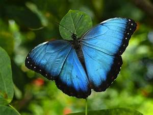 Beautiful Butterflies From Around The World