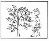 Mustard Coloring Seed Parable Pages Drawing Plant Tiny Colouring Template Sketch Getdrawings Popular sketch template