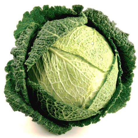 cabbage savoy green cabbage australian seed