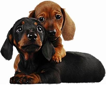 Puppies Clipart Dog Animals Transparent Dogs Tube