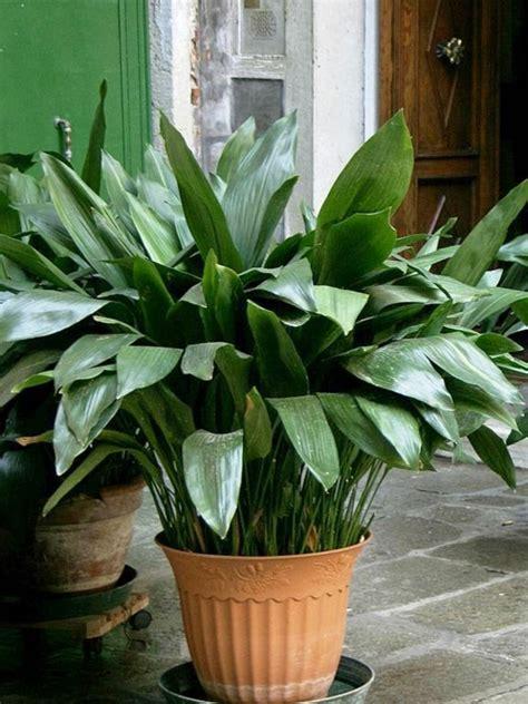 Welche Zimmerpflanzen brauchen wenig Licht?