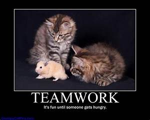 Funny Animal Teamwork Quotes. QuotesGram