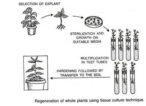 plant tissue culture environmental condition methods