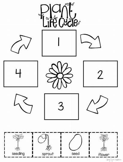 Cycle Worksheet Plant Preschool Worksheets Plants Kindergarten