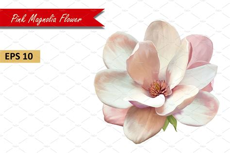 pink magnolia flower vector graphic objects creative