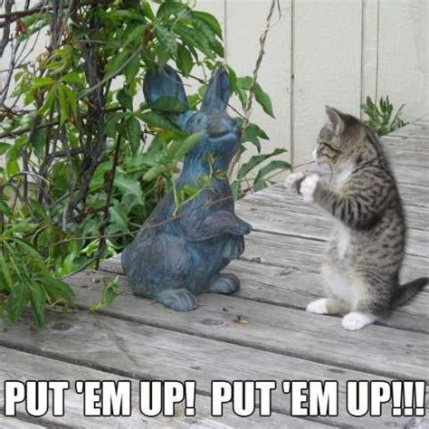 Put 'em up! Put 'em up! Kittyworks