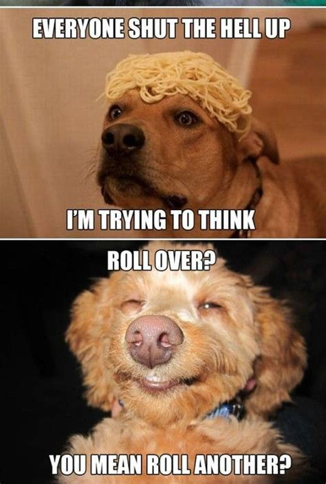 High Dog Meme - 17 best images about high dog memes on pinterest boxes the high and funny