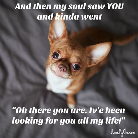 Chihuahua Memes - 17 best images about i love chihuahuas on pinterest chihuahuas chihuahua dogs and dog carrier