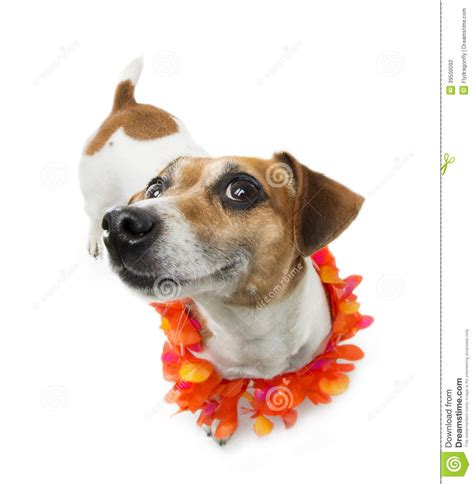 Pleased Dog Smiling Stock Photo - Image: 39500092