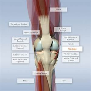 Discover Knee Anatomy and Maladies - NeoCart Clinical Trial