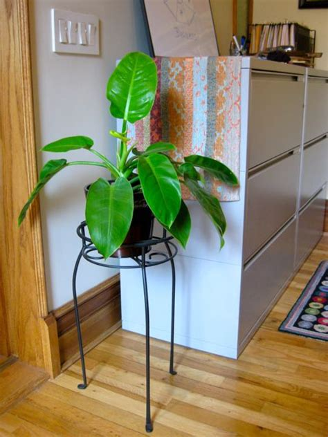 feng shui plants for office desk grow your business with feng shui open spaces feng shui