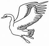 Flying Schwan Fliegender Volando Colorear Cisne Ausmalbilder Cigni Cigno Malvorlage Printable Vogel Stampare Vliegende Zwaan Cisnes Vola Schwäne Voando Ausdrucken sketch template