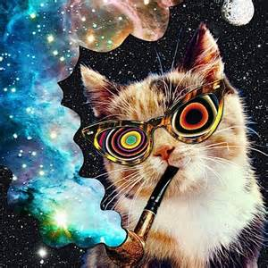 trippy cat 11 best images about trippy cats on