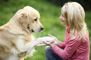 how to become a dog trainer With become a dog trainer