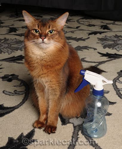 squirt bottle  discipline