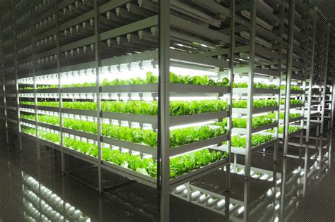 indoor farming led lights this is the world s largest indoor farm