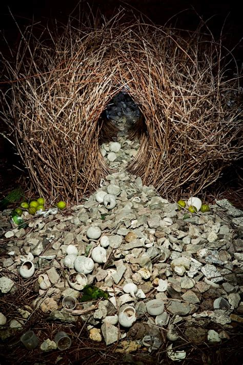 animal architecture photo series  ingo arndt