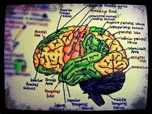 Hand Drawn Human Anatomy Study Diagrams By