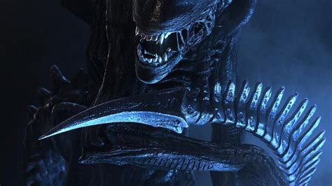 siege meditation 46 xenomorph hd wallpapers background images wallpaper