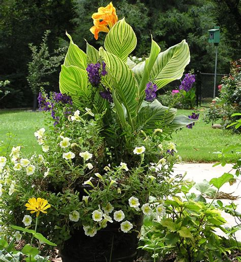 canna in pots designing a container garden using tropicanna 174 cannas your easy garden