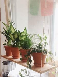 Zimmerpflanzen Auf Rechnung : 8 besten pflanzschalen bilder auf pinterest kostenlos lieferung und rechnung ~ Themetempest.com Abrechnung