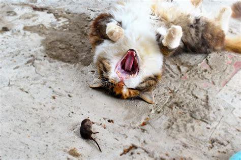 mole caught cat kat katze garden mol gevangen tuin wordt opfer door een maulwurf gefangen garten einem wird glove traps