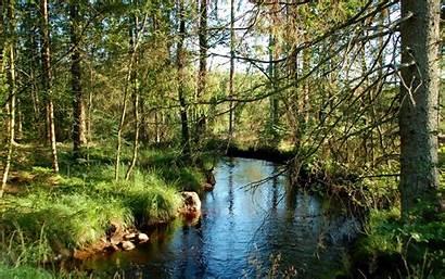 1680 1050 Fluss Wallpapers Rzeka Drzewa River