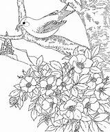 Goldfinch Coloring Eastern sketch template