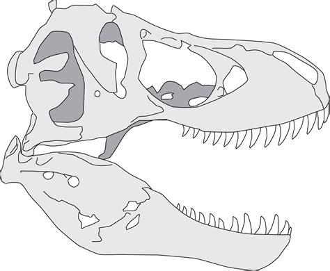 T Rex Skull Drawing Wwwpixsharkcom Images Galleries
