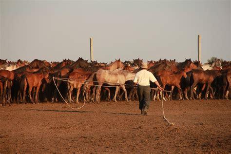horse domestication breeding animal horses scythian catching history unveiled breeder lessons kazakhstan kazakh natural denmark central north cnrs ludovic orlando